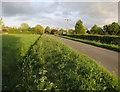 TL3245 : Fen Road by Hugh Venables