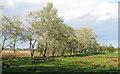 TM4991 : Trees along a dyke, Carlton Colville by Roger Jones