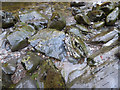 NS3497 : Rocks in Douglas Water by Thomas Nugent