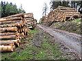 S7040 : Log Stacks by kevin higgins