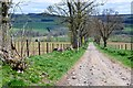 NT5914 : Track down to road near Hallrule by Jim Barton