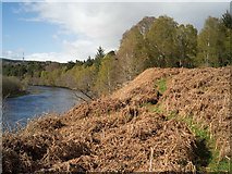 NH5043 : Footpath beside the River Beauly by Julian Paren