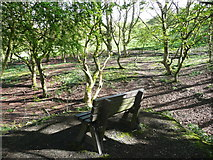 SE1025 : Seat in Cunnery Wood Nature Reserve by Humphrey Bolton