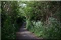 TM2430 : Path from Hall Lane by Robert Eva