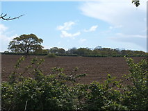 TM1822 : Field off Station Road, Thorpe-le-Soken by JThomas