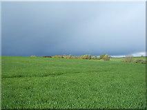 TM1928 : Crop field, Great Oakley by JThomas