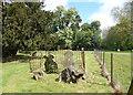 SU7467 : Tombstones & Treestumps by Des Blenkinsopp