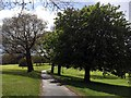 SK3582 : Tree-lined path in Graves Park by Graham Hogg