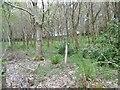 SY9694 : Lytchett Heath, spinney by Mike Faherty