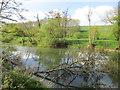 SE7465 : The River Derwent near Kirkham by Jonathan Thacker