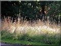 TQ5839 : Wild grasses by the road through Calverley Park by Patrick Roper