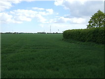 TM0927 : Crop field near Little Bromley by JThomas
