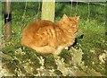 SE2448 : Cat, Stainburn by Derek Harper