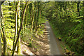 SX5260 : Cycleway above the River Plym by Stephen McKay