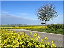 SE8665 : Lane to Wharram Percy by Paul Harrop
