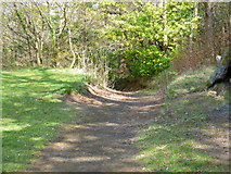 NS3174 : Path in Birkmyre Park by Thomas Nugent