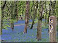 ST1583 : Signpost and bluebells, Coed y Wenallt, Cardiff by Robin Drayton