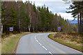 NH8923 : A93, Baddengorm Woods by David Dixon