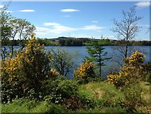 H5776 : Sunny at Loughmacrory by Kenneth  Allen