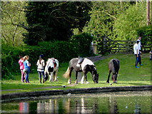 SO8688 : Horses near Greensforge Lock, Staffordshire by Roger  Kidd