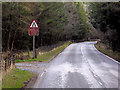 NJ0331 : A939, Mid Lynmore Wood near Cottartown by David Dixon