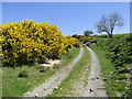 SH8753 : Gorse in bloom on the Hiraethog Trail by Eirian Evans