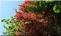 SX9065 : Leaves behind Summerfield Road. Torquay by Derek Harper