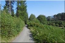 NS5379 : West Highland Way, Carbeth by Richard Webb