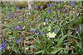 SD1993 : Bluebells and Primroses by Michael Graham