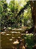 SD2806 : Woodland on the Sefton Coastal Path by Norman Caesar