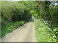 SW7518 : Tree and Hedge-lined road near Trelan Gate by Peter Wood