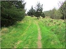 NO2005 : Path to West Feal farm, Lomond Hills by Bill Kasman