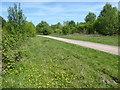 TQ5691 : Path in Harold Court Woods by Marathon