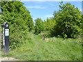 TQ5590 : Path in Harold Court Woods by Marathon