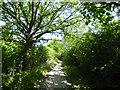 TQ5590 : Ivy Lodge Lane by Marathon