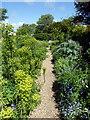 TQ4906 : Path in Garden at Charleston by PAUL FARMER