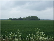 TF6404 : Crop field towards Old Covert by JThomas