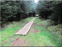 NO2003 : Duckboards on path, Lomond Hills by Bill Kasman