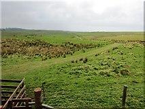 NO2003 : Path to West Feal farm, Lomond Hills by Bill Kasman