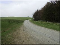 NO2103 : Road to West Feal farm, Lomond Hills by Bill Kasman