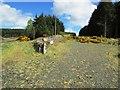 NO2203 : Path to Craigmead car park, Lomond Hills by Bill Kasman