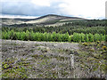 S7038 : Forest and Hill by kevin higgins
