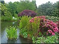 TQ4551 : The Golden Orfe Pond, Chartwell by Robin Drayton