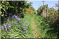 SH4068 : Bluebells on the Anglesey Coastal Path by Jeff Buck
