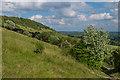 TQ1751 : On Box Hill by Ian Capper