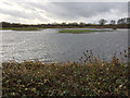 SP3875 : Pool with islands, Brandon Marsh Nature Reserve southeast of Coventry by Robin Stott