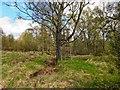 NH6756 : Deer Stan - Matheson's Croft by valenta