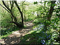 SN1607 : The Pembrokeshire Coast Path near Amroth by Dave Kelly