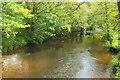 SX7255 : River Avon by Derek Harper