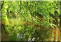 SX7353 : Beech leaves over the Avon by Derek Harper
